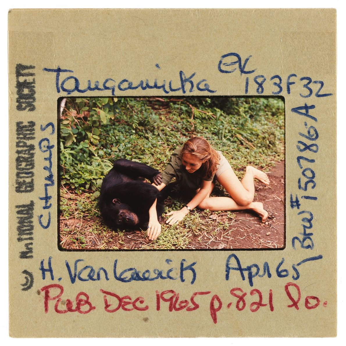 Jane and a chimpanzee play on the ground together.