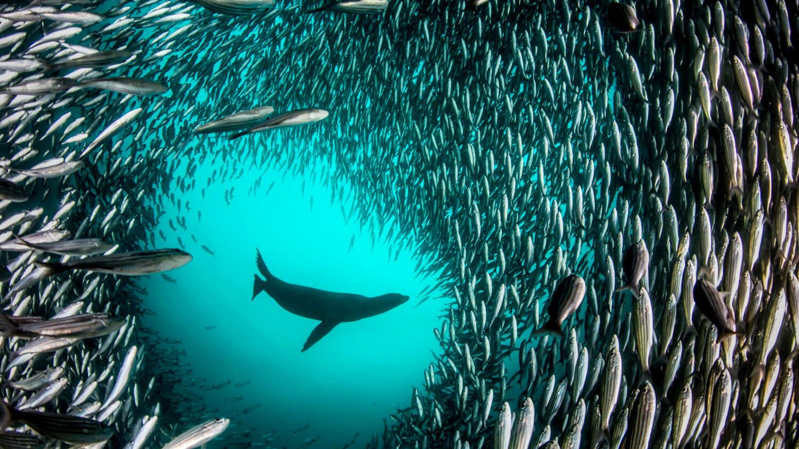 Learn about National Geographic's Ocean Impact initiative