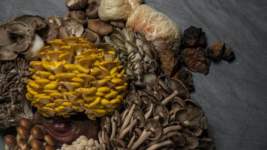 Fungi are key to our survival. Are we doing enough to protect them?