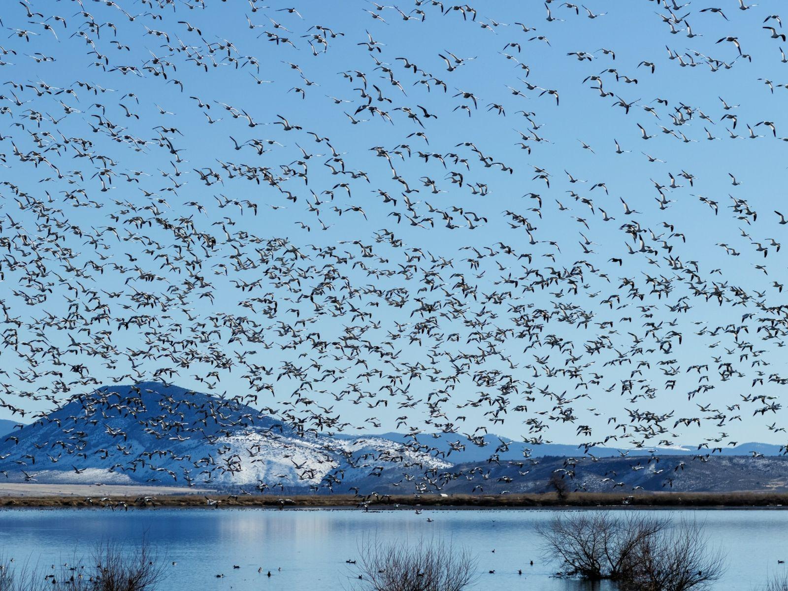 Bird Migrating