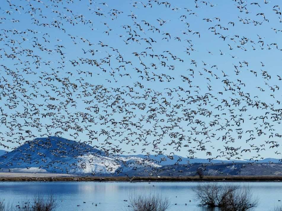 Bird migration is one of nature's great wonders. Here's how they do it.