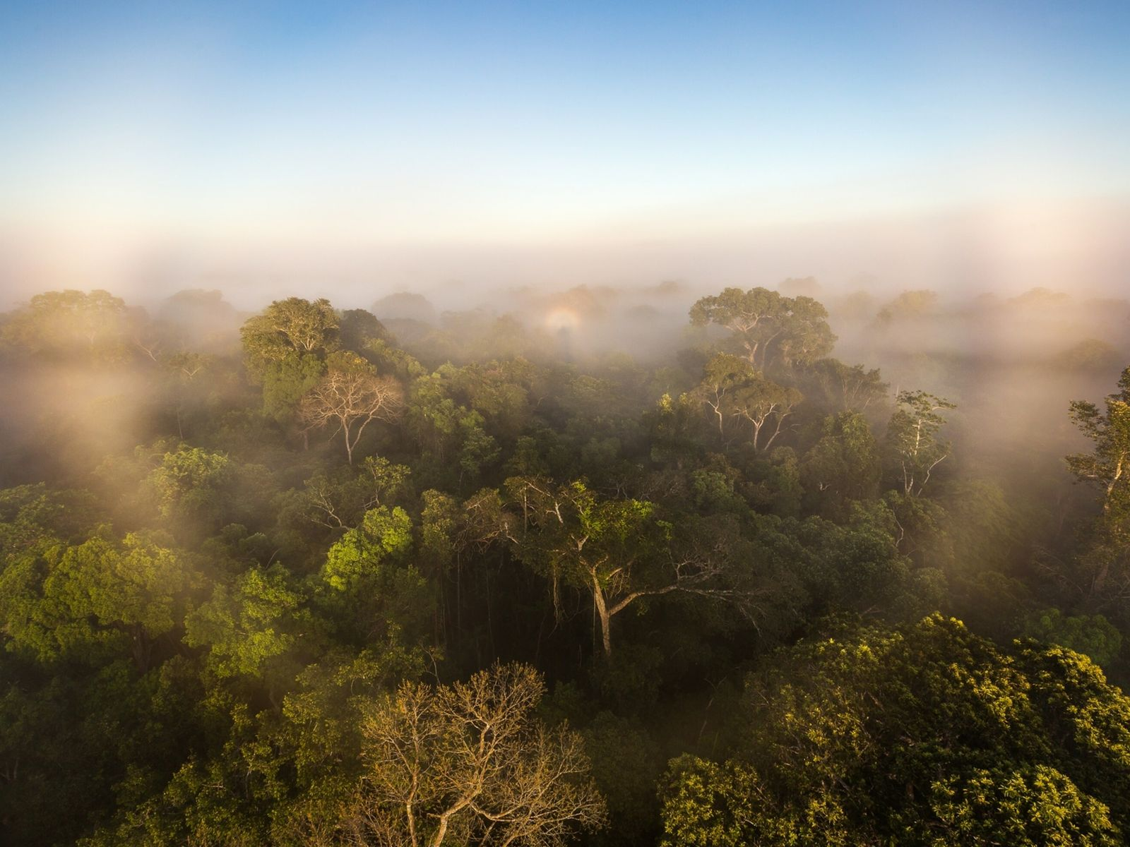 Sunrise creating a halo in the early morning mist over the canopy of the rainforest. Alta ...