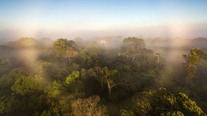 Amazon rainforest now appears to be contributing to climate change