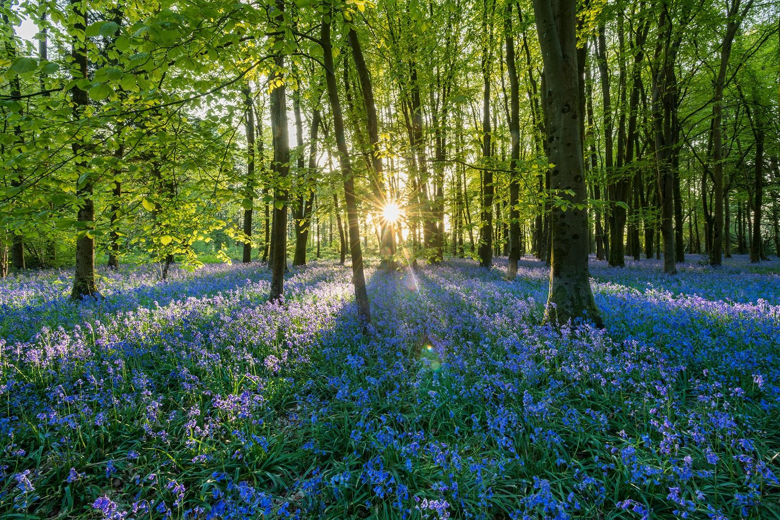 What is 'forest bathing' – and how does it help?