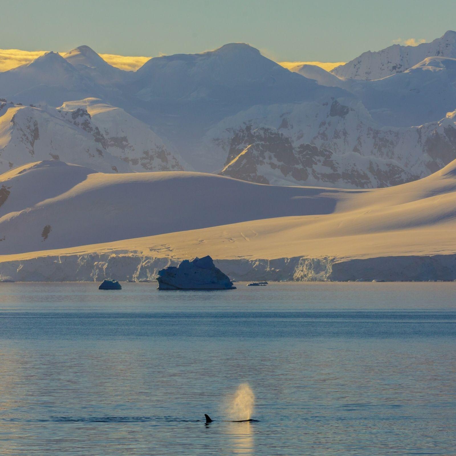 whale-blowhole-myth