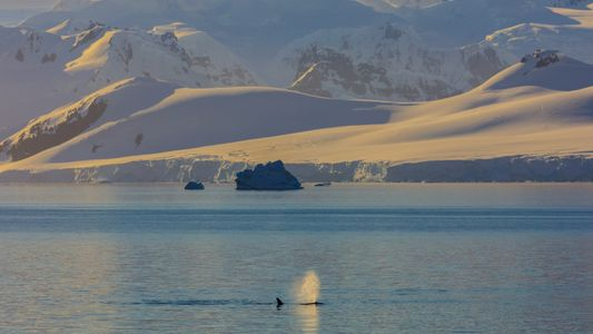 Whales don't spray water from their blowholes and other myths, debunked