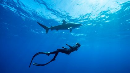 Here's what kids can learn from sharks