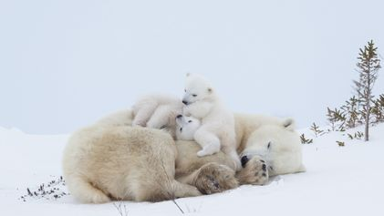 20 heartwarming pictures of animals and their offspring