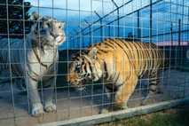 tiger-king-legel-trouble-01
