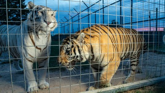 'Tiger King' stars' legal woes could transform cub-petting industry