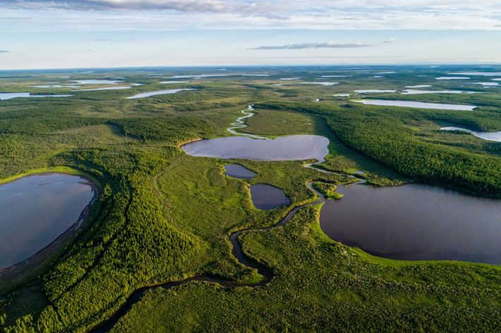 The lush green of Pleistocene Park weaves its way around northern Russia's blue lakes in this ...
