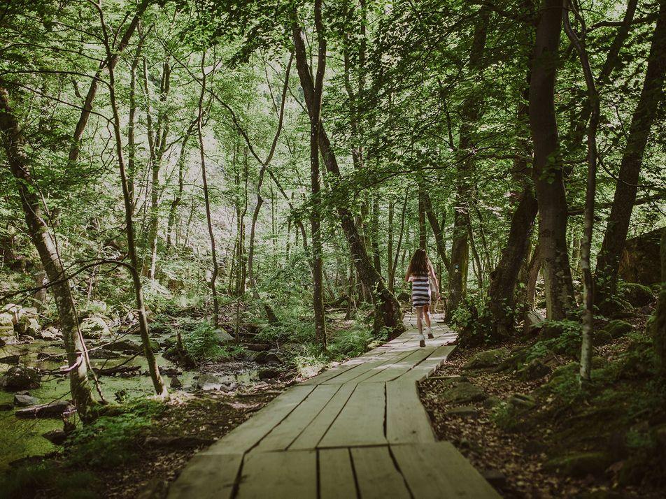 Söderåsen National Park: A hiker's paradise