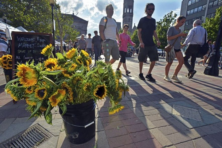 Sunflower stand beside a farmer's market in Copley Square, Back Bay, Boston.