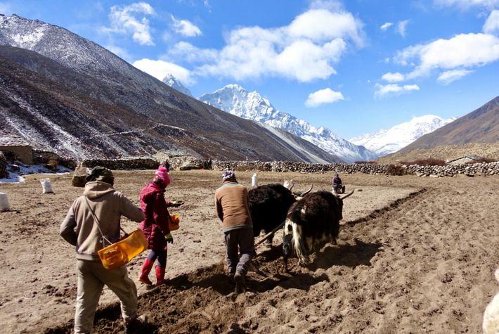 Nepal 45B64476-6EAA-4692-BBDA-B961361632CF_1_201_a
