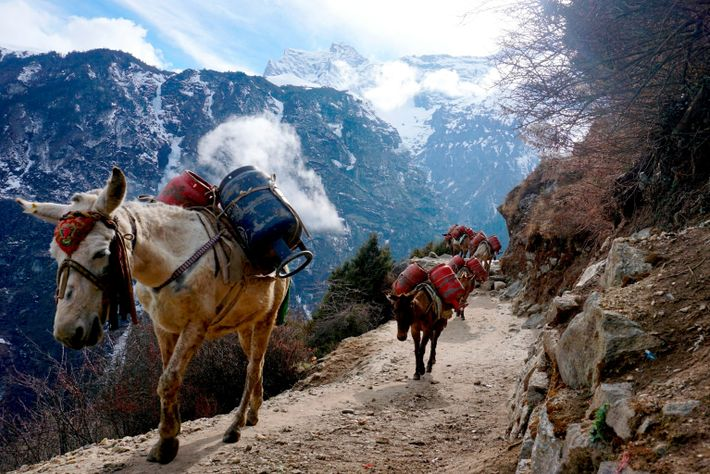 Nepal GettyImages-1208090099