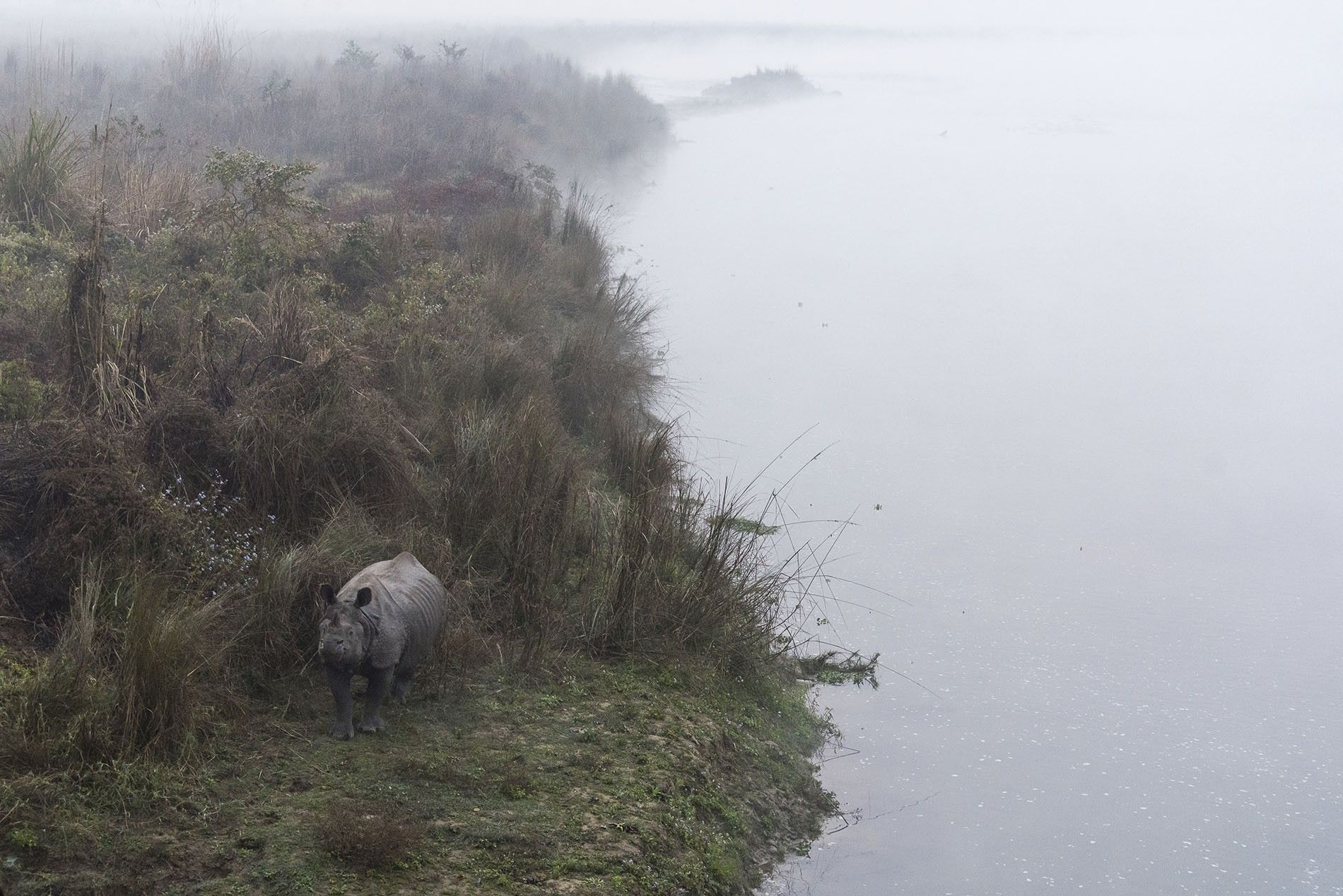 Rhino in the early morning mist, Chitwan National Park.