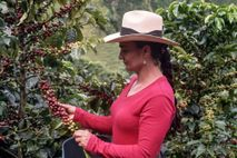 Alba Maria, matriarch of a multigenerational coffee-growing family in Caldas, Colombia, carefully selects only the ripest ...