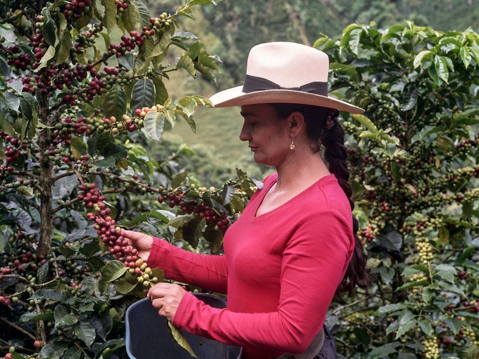 Securing a livelihood for generations of coffee farmers