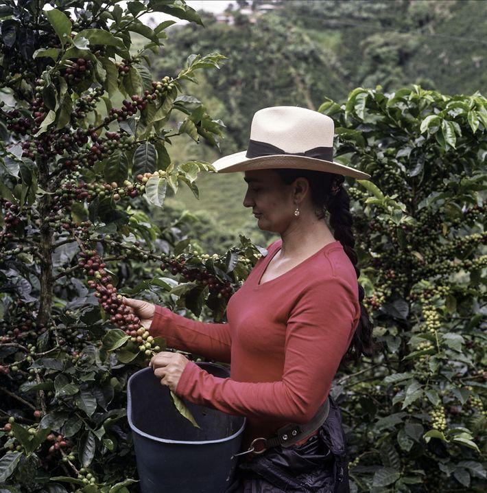 A brighter future for coffee farmers