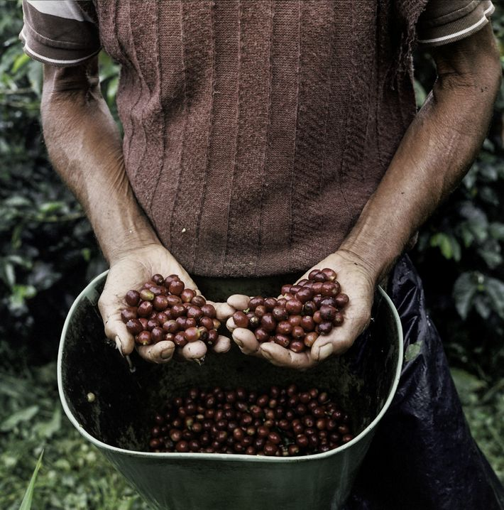 Small coffee farms dot the slopes of the Andes mountains in Colombia's Caldas province west of ...