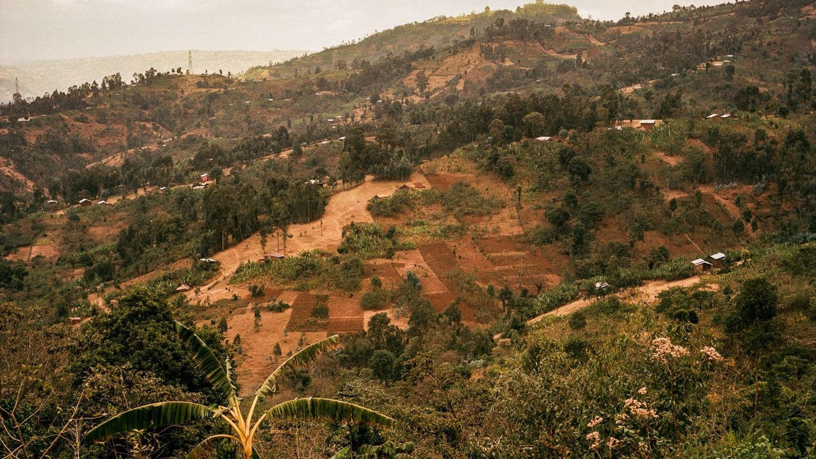 Ethiopia is widely considered to be the genetic birthplace of Arabica coffee, where coffee cultivation has ...