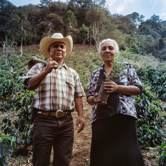 As part of their training, locals and farmers alike plant tree saplings on a demonstration coffee ...