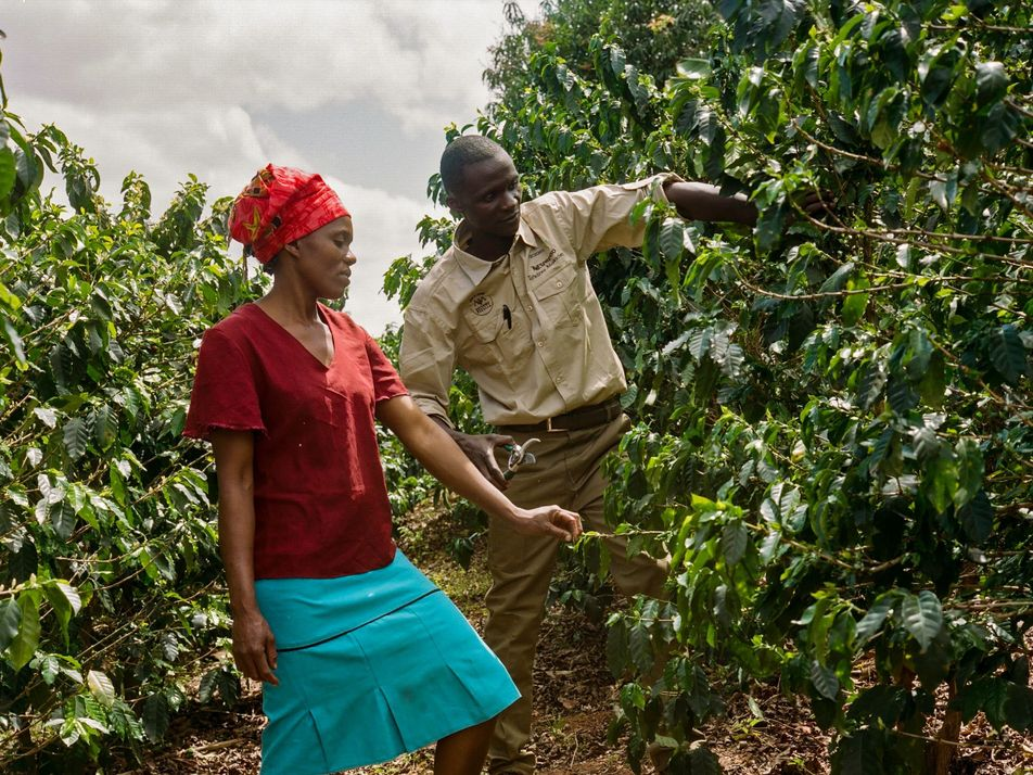 Revitalizing Zimbabwe's coffee farms through education