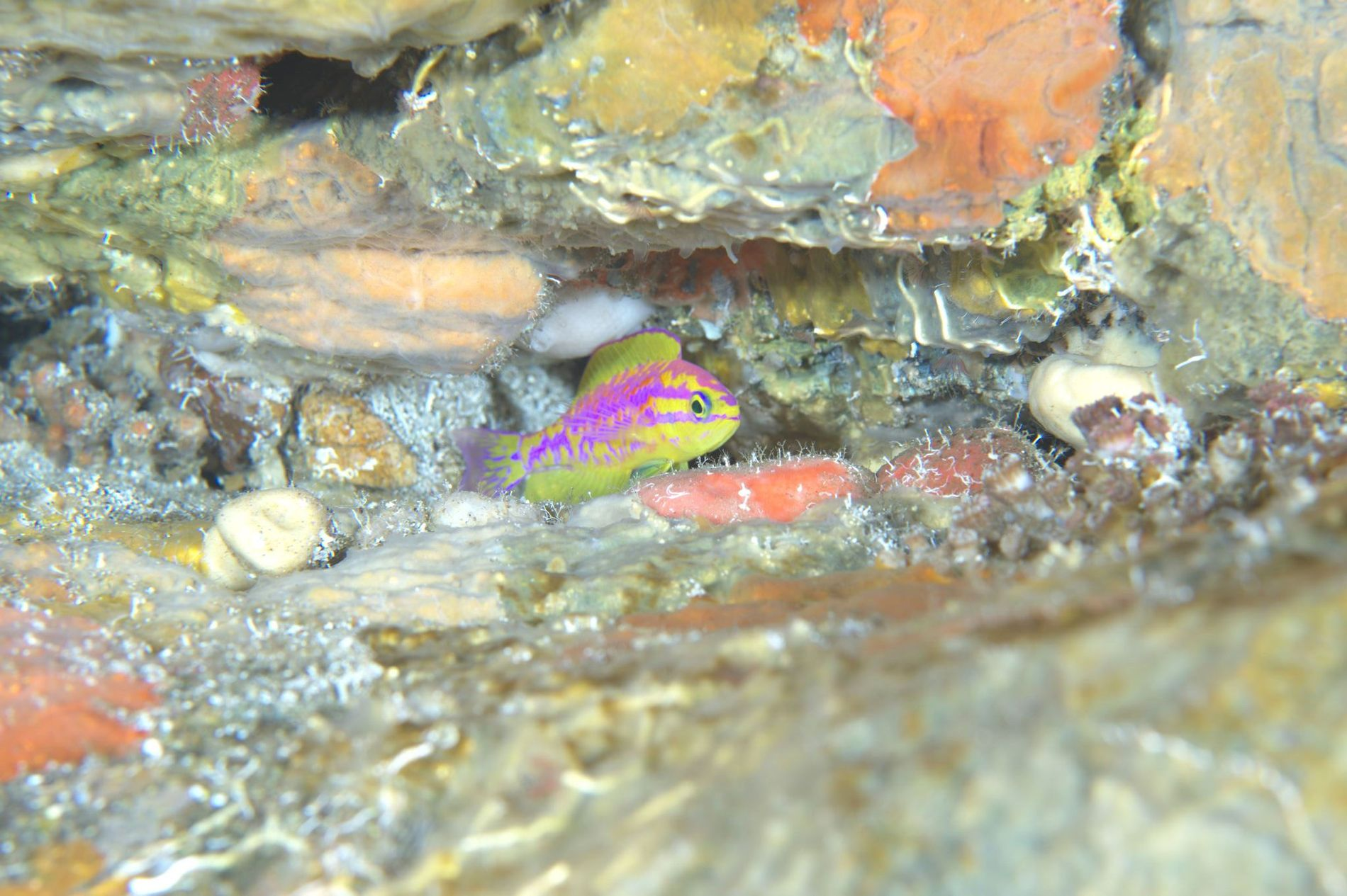 New, Ultra-Colourful Neon Fish Species Discovered