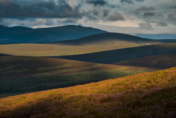 Heather-covered hills—ideal habitat for grouse—add to the allure of the Highlands for wealthy foreigners.