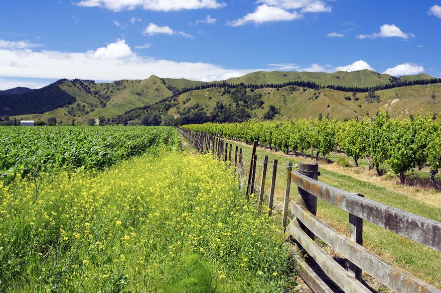 Gisborne's annual Wine and Food Weekend draws connoisseurs for three days of live entertainment, street parties, ...