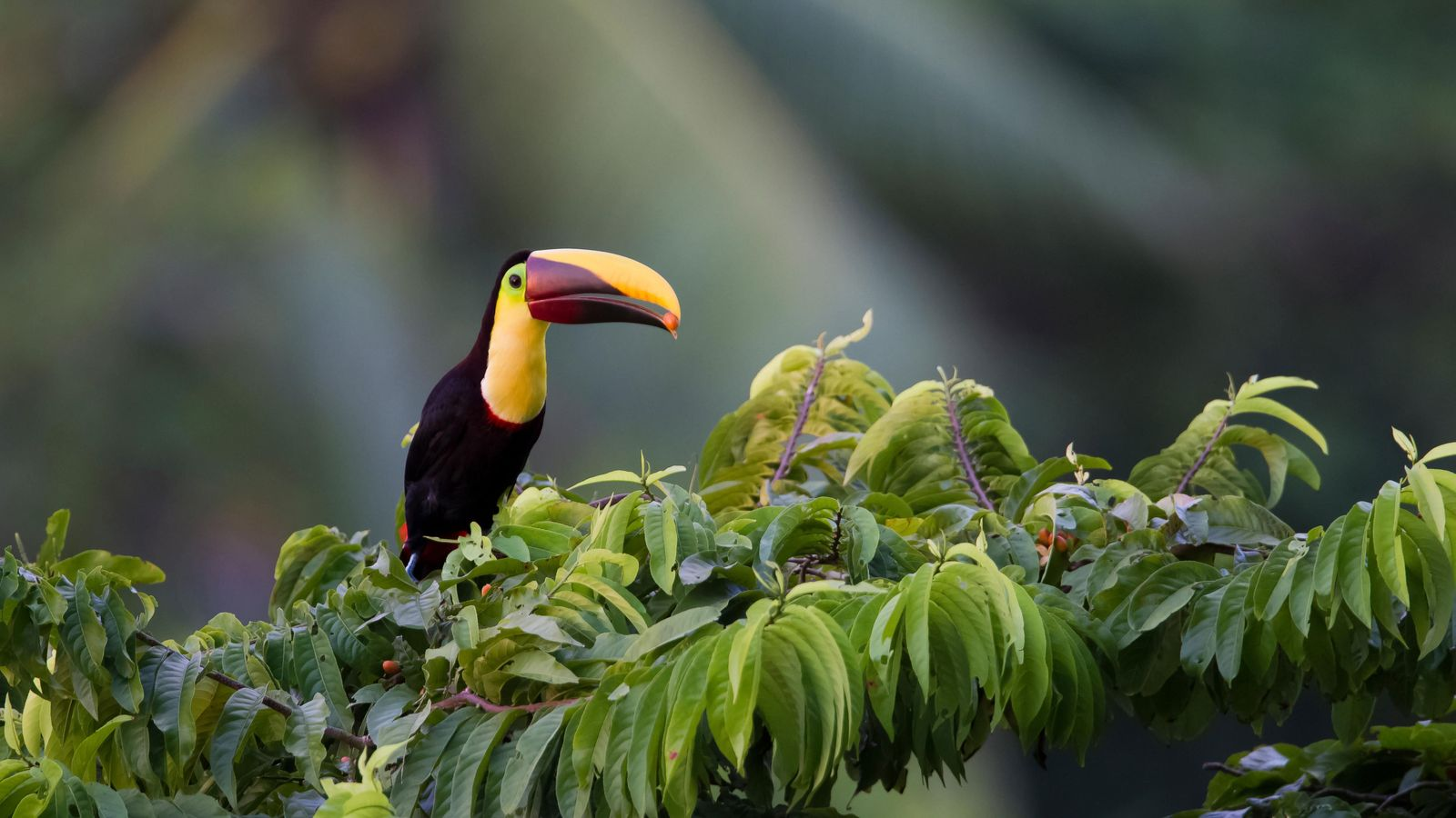 Costa Rica is a place prized for its pristine rainforest and abundant wildlife.