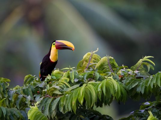 Kate Bradbury on why Costa Rica should be a blueprint for conservation