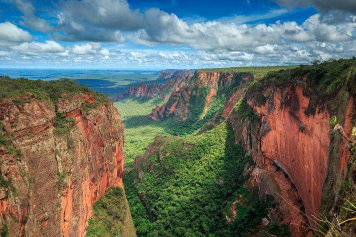 The Cerrado, covering almost a quarter of Brazil's land surface, is uniquely biodiverse.