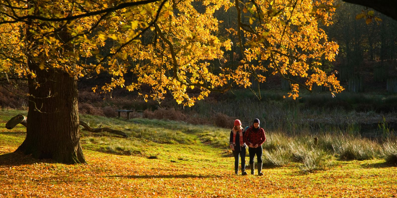 Five of the best autumn walks in England for families