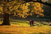Fiery autumn foliage at Dunham Massey in Cheshire.