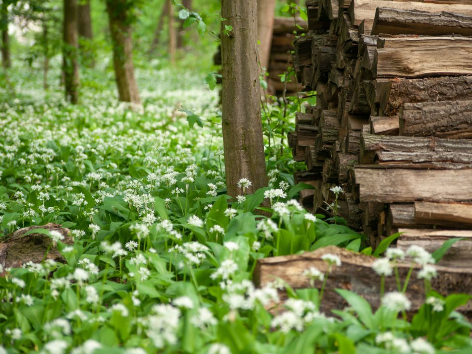 A year-round foraging calendar: what to pick and where in the UK