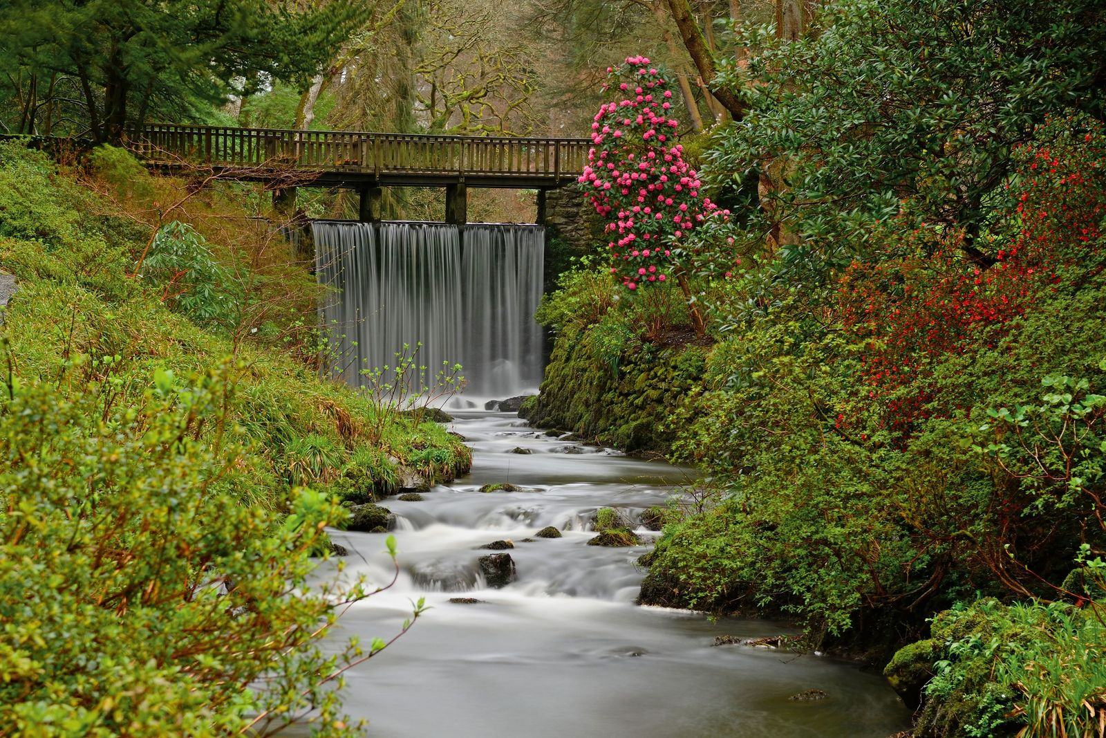 Five wild and enchanting gardens to experience in England and Wales this summer
