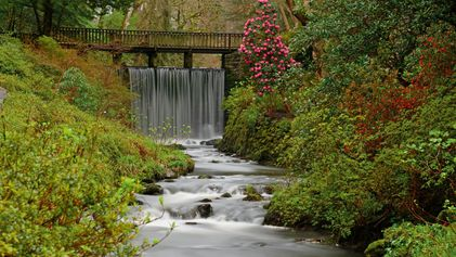 Five wild and enchanting gardens to experience in England and Wales