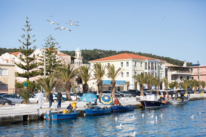 Seagulls circle expectantly overhead in Argostoli as fishermen unload their nets.