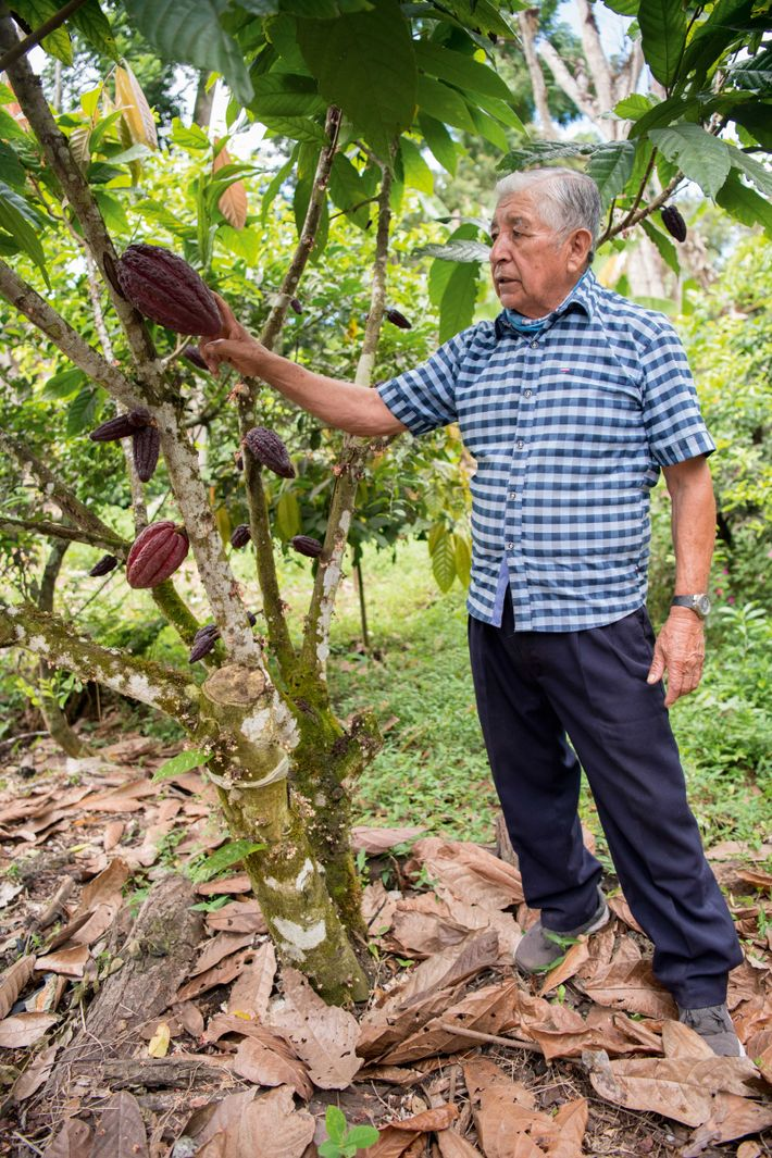 Cane liquor, unrefined sugar, raw chocolate and wild coffee are cultivated on the agricultural highlands of ...