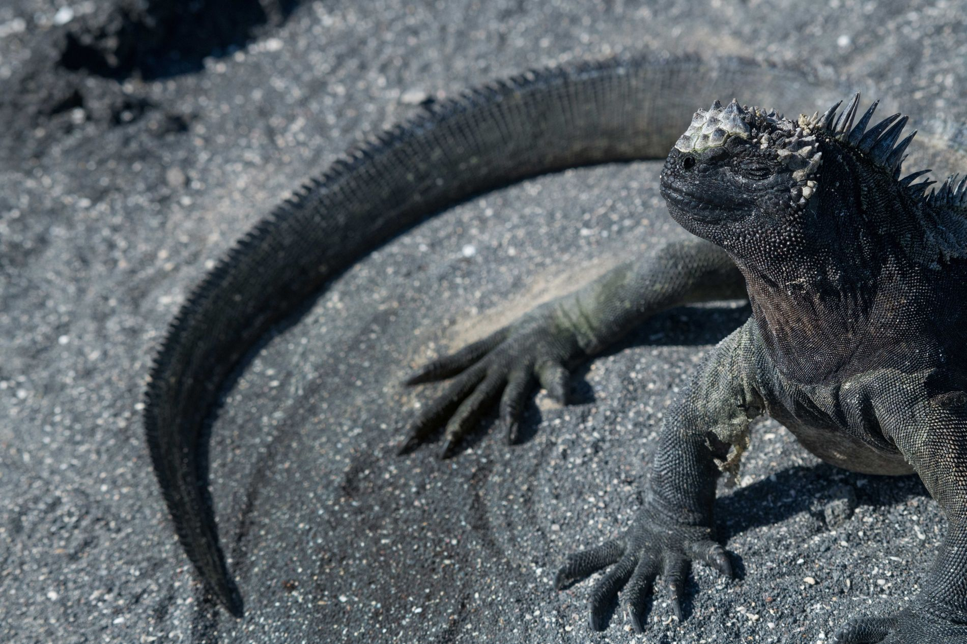 Residents of the Galápagos Islands are learning new ways to co-exist alongside the islands' rare and ...