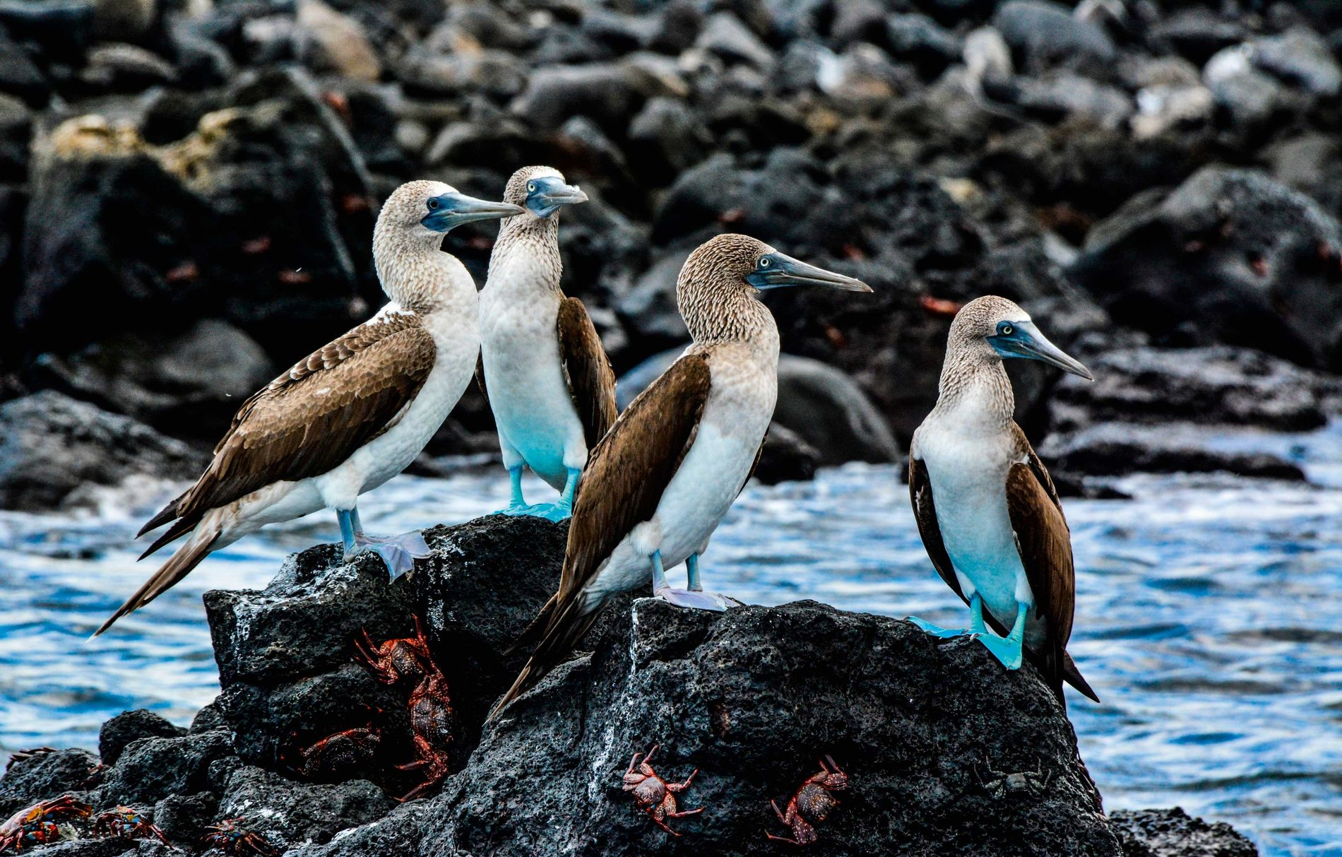 The island of Daphne Major is home to a winged menagerie: red-billed tropicbirds, pelicans, gannets and ...