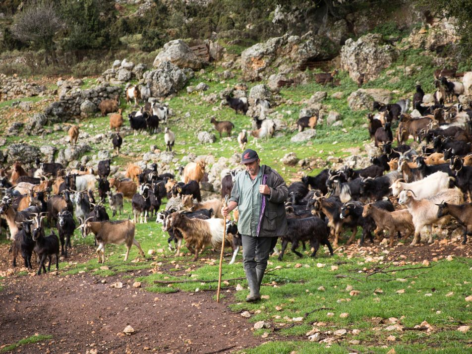Photo story: rural traditions in Kefalonia