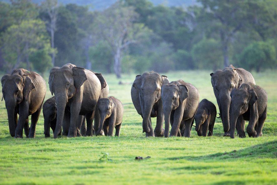 Sri Lanka: the secrets behind Asia's mightiest elephant migration