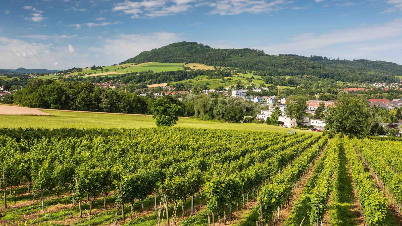 Thanks to its rich wine-growing tradition, mild climate and the influence of Alsatian cuisine, Baden is ...