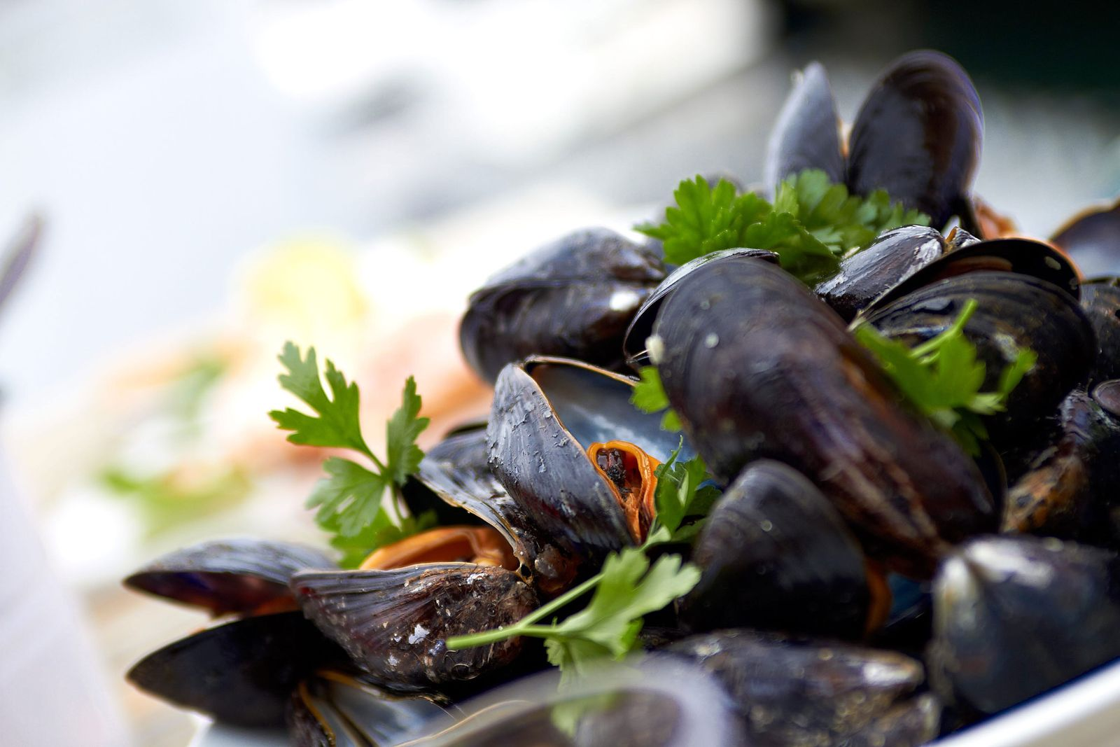Shellfish safaris are just one of many promoting the region's Big Five (a playful reference to ...