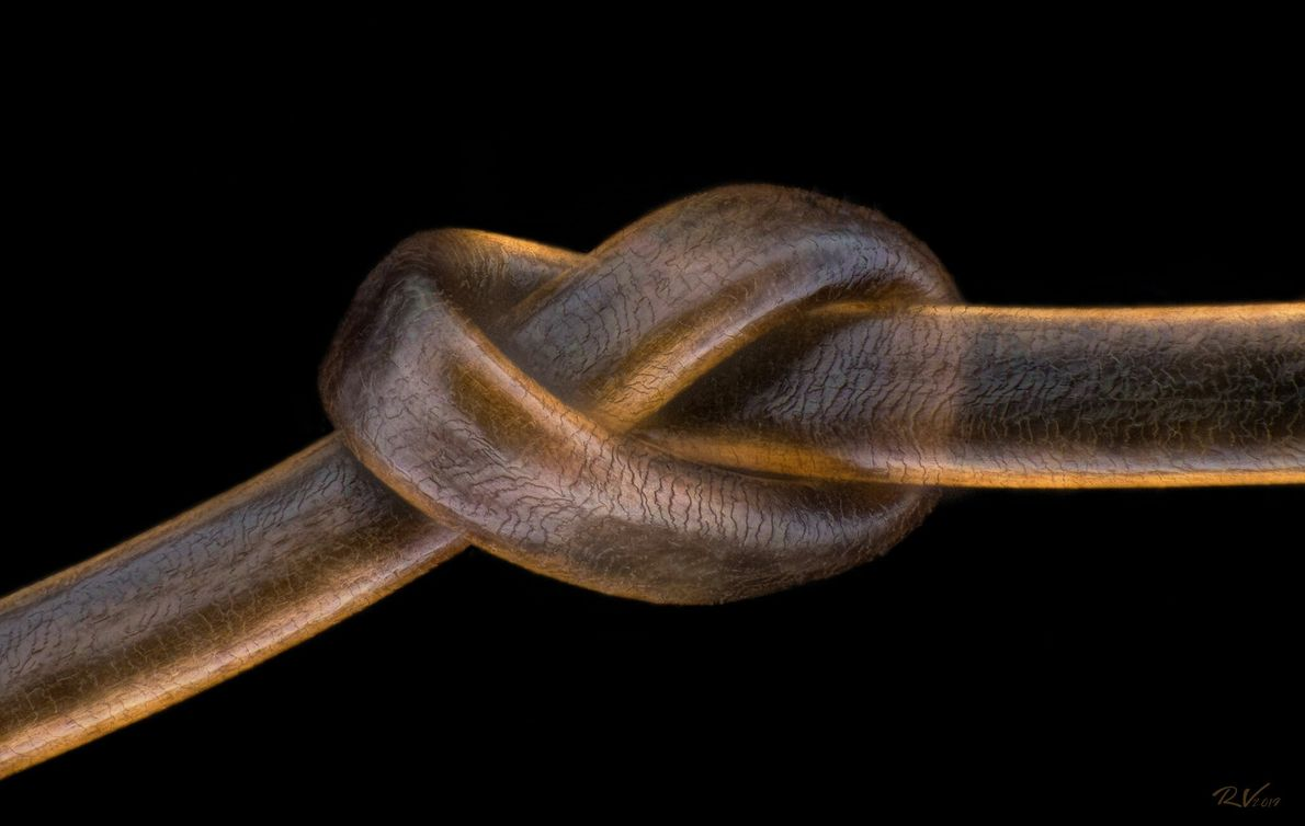 Austrian photographer Robert Viethaler stacked images to depict  one strand of human hair, tied in ...