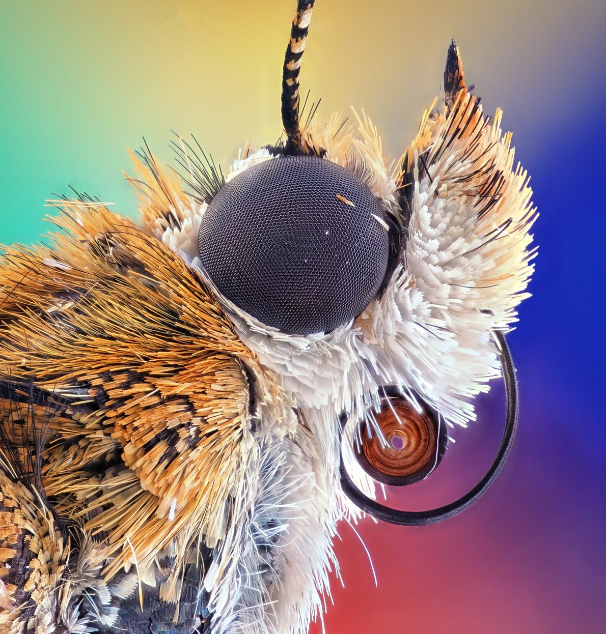 Most moths have eyes coated in a nanostructure that sucks in light and prevents reflection, which ...