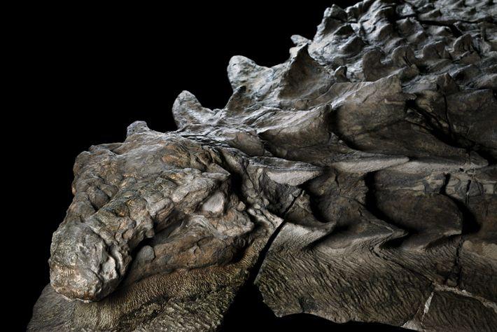 nodosaur_2529147.jpg?w=710&h=474
