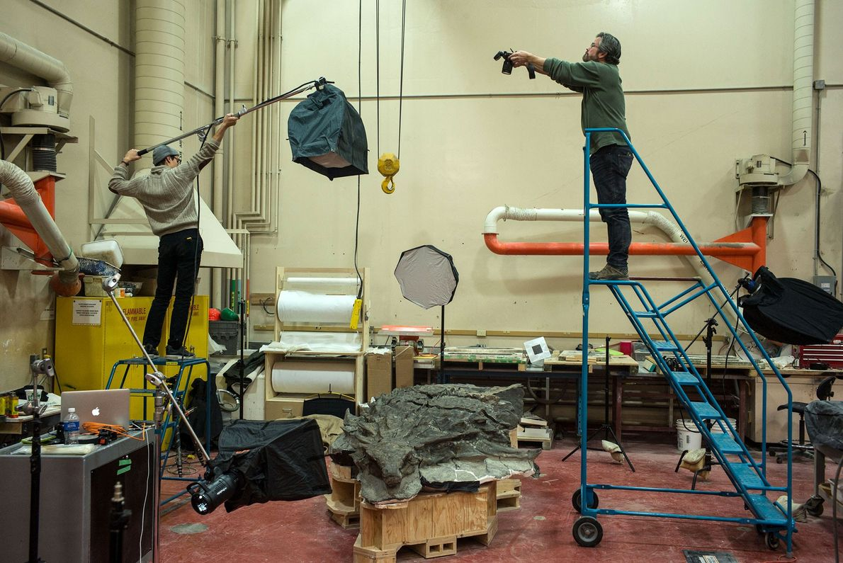 Photographer Robert Clark (at right) photographing the nodosaur fossil from above in the preparation lab at ...